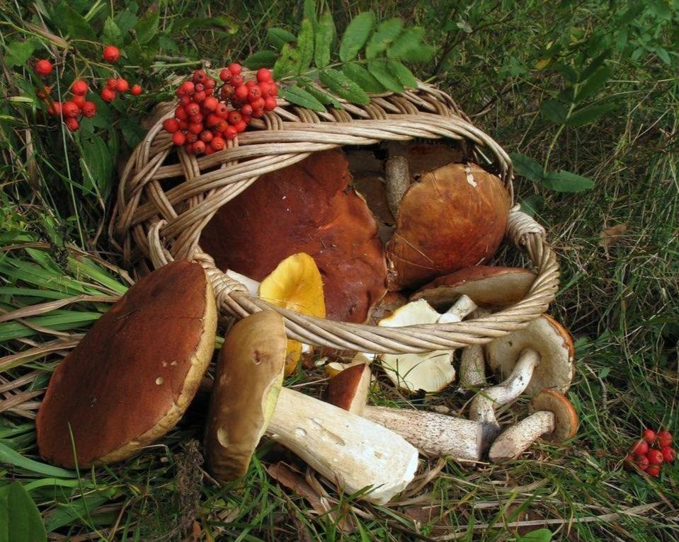 в карпаты за грибами