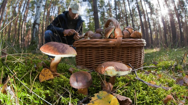 поездка в карпаты за грибами
